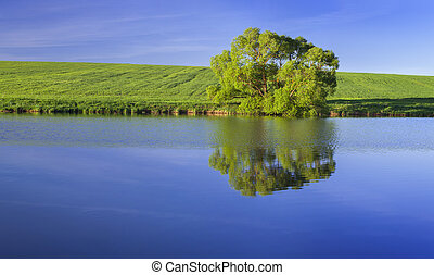 Panorama with lonely tree on the green summer meadow on the ...
