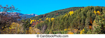 Panorama with Trees Autumn Colors, green, yellow, red in the mountains