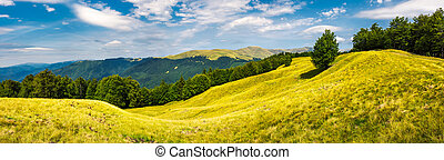 panorama with trees on the grassy hillside - panorama of...