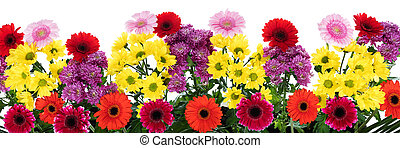 panorama with various flowers in front of white background