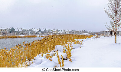 Panorama Yellow grasses growing on the shore of a lake covered with fresh snow in winter