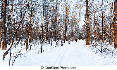 ski track and footpath in snow-covered urban park