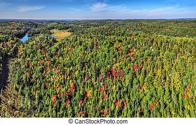 Panoramic aerial of colorful woods