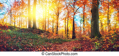 Panoramic autumn forest landscape