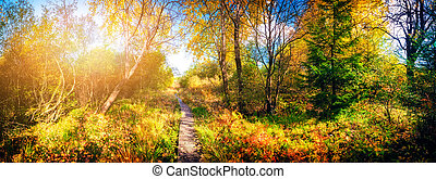 Panoramic autumn landscape with country path