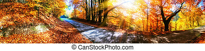 Panoramic autumn landscape with country road in orange tone