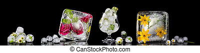 Panoramic image with flowers frozen in ice cubes. Isolate on...