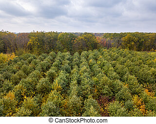 Panoramic landscape from a drone above young forest in autumn colors.