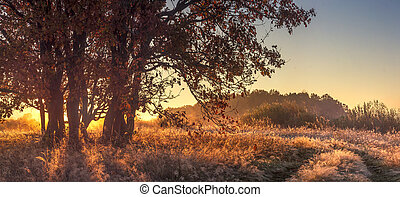 Panoramic landscape of autumn nature in the clear october morning. Large tree on golden grass in sunlight. Autumn nature landscape on sunrise.