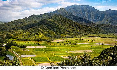Panoramic landscape view of Hanalei valley and green taro fields, Kauai