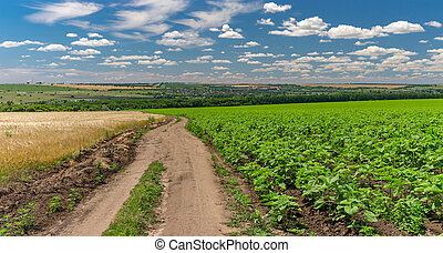 Panoramic landscape with an arth road among sunflower and wheat agricultural fields