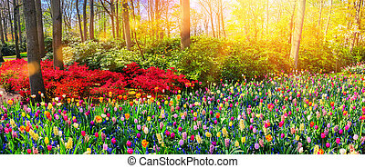 Panoramic landscape with multicolor spring flowers. Nature background