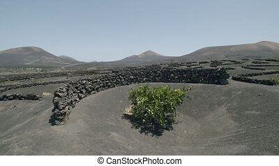Panoramic Lanzarote scene with La Geria vineyards, Canary ...