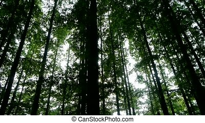 Panoramic of trees crown, forest, jungle, shade shadow.