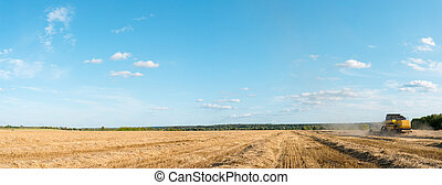 Panoramic photo of wheat field working combine harvester, blue sky.