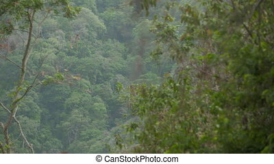 Panoramic | Rainforest Valley, Casanare, Colombia - Wide...