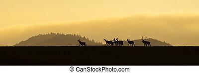 Panoramic scenery of red deer herd walking on a horizon at sunrise.