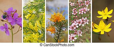 Panoramic set of Australian wildflowers