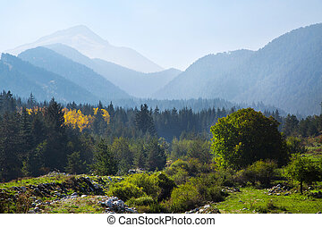 panoramic shot of mysterious misty pine tree forest with yellow spot and mountains