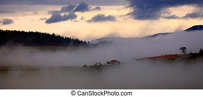 fogy meadows