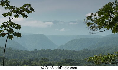 Panoramic | Tropical Rainforest, Costa Rica - Wide low angle...