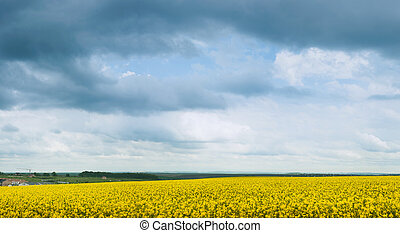 panoramic view blooming canola and grey storm clouds.