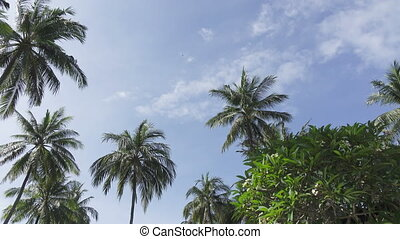 Panoramic view from below of tops of palm trees against the background of the solnetsny blue sky in the tropical resort