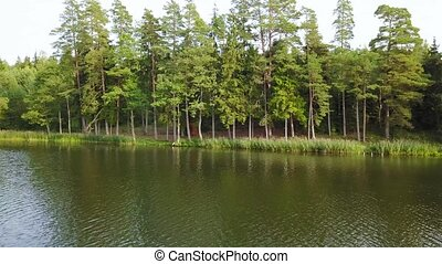 Panoramic view from right to left on the forest area in the river. Aerial survey