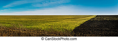 Panoramic view green field at sunset and plowed half with soil on one side.