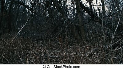 Panoramic view in dark forest at mess of dead branches POV