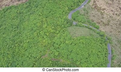 Panoramic View Jungle with Trees for Paper Production -...