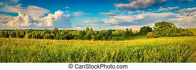 Rural landscape. Panorama