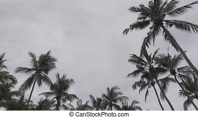 Panoramic view of a palm tree on tropical the resort of Bali Indonesia