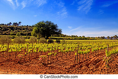 Panoramic view of a vineyard in Provence, France.
