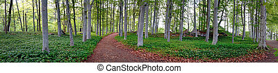 aspen trees in park - Panoramic view of aspen trees in park ...