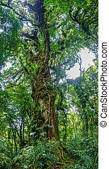 Panoramic view of entire tree in the forest - Wide angle ...