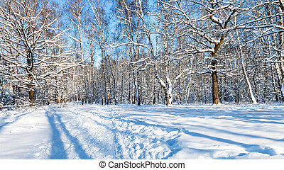 panoramic view of forest glade in sunny winter day