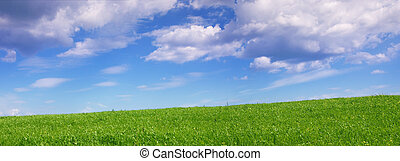 Panoramic view of green summer fields under a blue sky with clouds sky