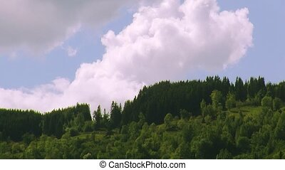 Panoramic view of green woods on hill in summer day. Big...