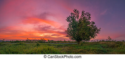 Panoramic View of Lonely Tree with Vibrant Color Sunset Sky