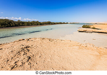 Panoramic view of mangroves in the Ras Mohammed, Sinai, Egypt