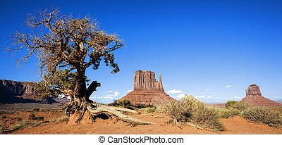 Panoramic view of Monument Valley and tree