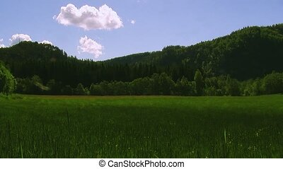 Panoramic view of mountains covered green woods in summer...