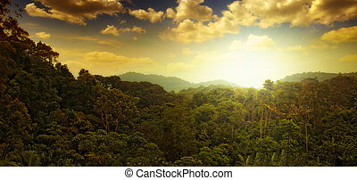 sunset - panoramic view of nice tropical sunset over jungle...
