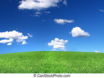 panoramic view of peaceful grassland with cumulus clouds above, focus set in foreground