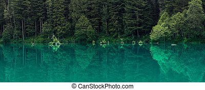 Panoramic view of perfect pine tree reflections