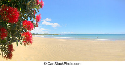 Panoramic view of Pohutukawa red flowers blossom on the month of December in doubtless bay New Zealand.