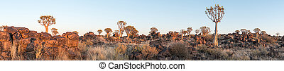 Panoramic view of quiver tree forest at Garas near Keetmanshoop