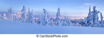 Panoramic view of snow covered alpine trees with a vast mountain range in the background