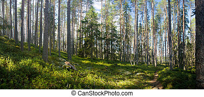 summer forest - panoramic view of summer forest at Ruunaa...